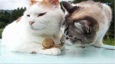 Wat had dat gedacht, een vriendschap tussen katten en slak. Zo te zien hebben ze het erg fijn met elkaar!