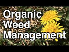 Weeds can become a pain in the garden and even ruin this wonderful hobby. This week I take a look at no till weed management so you can STOP weeding your garden! Diy Pest Control, Weed Control, Garden Weeds, Lawn And Garden, Diy Garden Projects, Garden Tools, Organic Gardening, Gardening Tips, Food Safety Tips