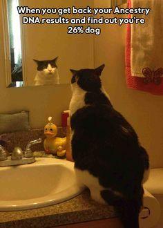 Cat Meme  When you