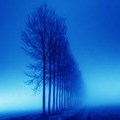 bare tree line in blue dawn