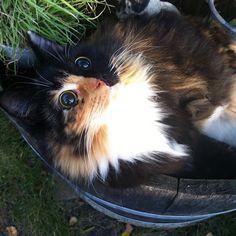 Jasmine, una gata ciega callejera, fue encontrada vagabundeando confusa y asustada por las calles de Francia