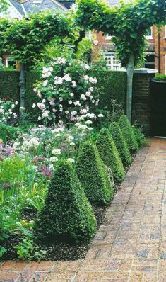 A brick path is edged with box topiary. I think this is Jenny Raworth's front garden in Twickenham which opens regularly for the National Garden Scheme (www.) The hedge is the most manicured privet I have ever set eyes on!