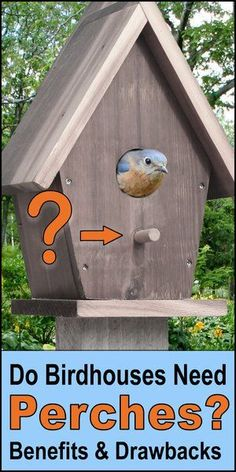Do Birdhouses Need Perches? Benefits & Drawbacks of adding a cute perch to your homemade birdhouse design. I like to make birdhouse's to attract birds and I like to make a good design that is practical to the bird but also lovely. If you're also a fan of backyard birdhouses get these tips now! Diy Projects For Beginners, Cool Diy Projects, Purple Martin Birdhouse, Modern Birdhouses, Bird Feeder Plans, Bird House Plans, Birdhouse Designs, Bird Houses Diy, Bird Boxes
