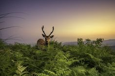 This photo was taken in Nara of Japan.It was encountered when entering the mountain to take a sunrise.The legend story of the Shinto religion says that deer is the passenger of the deity.So they are protected carefully here.