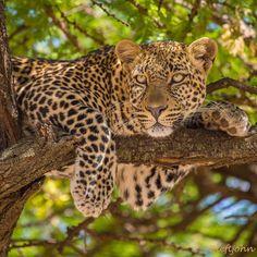 Amazing Wildlife Animals Portrait Photography by Jon Langeland #photography #animals