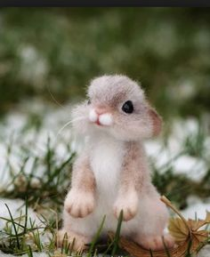 Who love Baby Squirrel? #aww #cute #animals #cats #dogs Baby Animals Pictures, Cute Animal Pictures, Animals And Pets, Pictures Of Baby Animals, Smiling Animals, Nature Animals, Farm Animals, Cute Little Animals, Cute Funny Animals