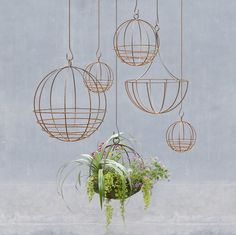 Show off your new air plants with a trendy, copper-hued hanging planter.