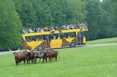 Safaribus v ZOO Dvur Kralove