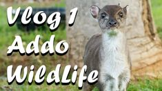 Vlog 1 Addo Wildlife and Lifestyle Centre - The Daily Vlogger in Afrikaans