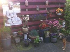 Voorjaar in onze tuin