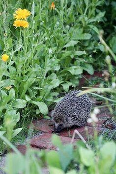 Gardener friend