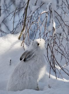 Winter Hare- Hey Bunny are you as sick of this mess as I am? AND we are getting some more WEDS!