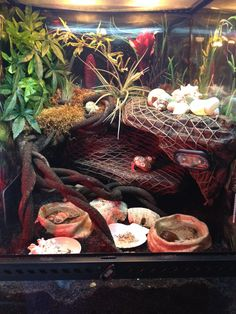 Crabitat I like how the netting covers everything-making climbing easy Hermit Crab Cage, Hermit Crab Homes, Hermit Crab Habitat, Hermit Crab Shells, Hermit Crabs, Crabby Patties, Crab Decor, Crab House, Animal Habitats
