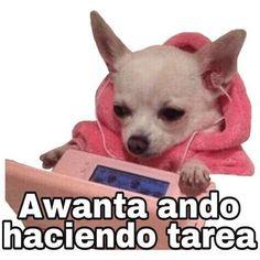 🌼FNF STUFF 🌼 - EL MORRO DE PELO ASUL 🥰🌈 - Wattpad Monsta X, Reaction Pictures, Funny Pictures, Bts Memes, Funny Memes, Anime Best Friends, Spanish Memes, Stickers, Meme Faces