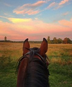 best view of the sunset is seen between the ears of a horse