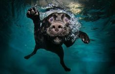 "Dogs + Water = Fun! (BTW: This is not my dog Luna--I just like the photo.) To rehabilitate after her TPLO surgery, Luna ""worked out"" in a dog-sized aquarium equipped with an underwater treadmill. A water workout can do wonders for a dog's body, mind, and spirit!"