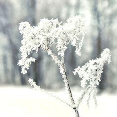 Winter white woodland photo snow ice nature grey landscape home decor wall art