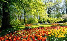 extenso parque de más de 32 hectáreas situado entre las localidades de Lisse e Hillegom, Holanda. También conocido como el jardín de Europa es uno de los lugares más bellos del país. Posee una impresionante colección de flores e híbridos de diferentes especies, invernaderos (donde se venden flores, bulbos y semillas), molinos antiguos, lagos, fuentes y grandes paseos.