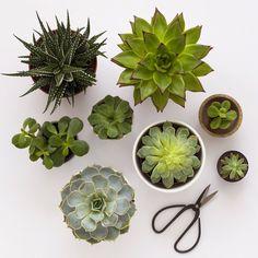 Succulents / Candy Pop: candypop.uk.com
