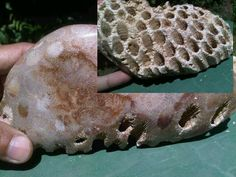 this is Fossil wasp nest, it's unic and really, and i priced 16 USD/kg
