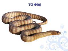 Πληροφορίες κι Εποπτικό Υλικό: Ζώα σε Χειμερία Νάρκη Holidays And Events, Snake, Humor, Animals, Messages, Google Search, Snakes, Pretty Animals, Frases