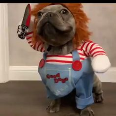 Chucky Dog Costume - Best Costumes for Small Dogs Funny Costumes for . - Chucky Dog Costume - Best Costumes for Small Dogs Funny Costumes for Small Dogs Animal Jokes, Funny Animal Memes, Dog Memes, Cute Funny Animals, Cute Baby Animals, Funny Dogs, Cute Animal Humor, Scary Animals, Funny Puppies