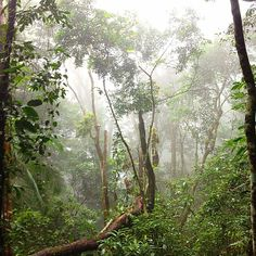 Sprawled over twelve square miles, Tijuca Forest is the globe's largest urban forest. A combination of natural and man-made sites surrounded by lush greenery and mountain.
