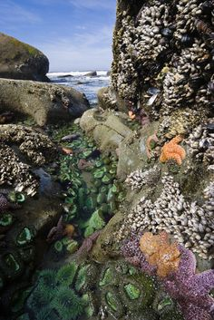 Tom Cochrun /Light Breezes: THE LIBERATION OF FOX NEWS ...  |Pacific Northwest Tide Pool