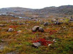 File:Nunavut tundra -c.jpg