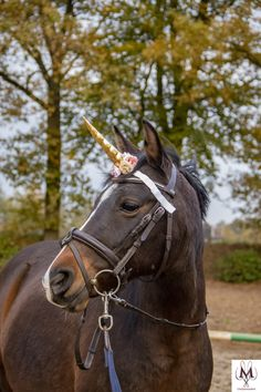 Equestrian Gifts, Equestrian Fashion, Equestrian Style, Bay Horse, Horse Fly, Beautiful Horse Pictures, Beautiful Horses, Unicorn Horn For Horse, Show Jumping