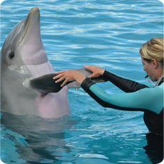 dophin_handshake