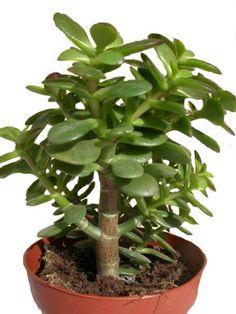 la succulente la plante grasse astuces d co et conseil d 39 entretien placer les succulentes. Black Bedroom Furniture Sets. Home Design Ideas