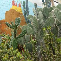 Beautiful cactus garden found at Wythenshawe Park in Manchester thanks to Pokemon go