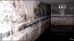 Mold problems arise in Kentuckiana homes as floodwaters recede.