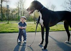 31 Biggest Dogs In The World We Can't Believe Are Real - 15