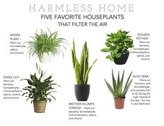 Put some plants to work   harmless home harmlesshome.com