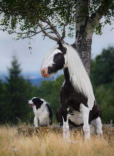 20 Animales de distintas especies tan parecidos que podrían ser hermanos