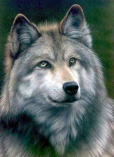 Beautiful color pencil drawing Grey Wolf by Colin Howard . Beautiful Creatures, Animals Beautiful, Tier Wolf, Animals And Pets, Cute Animals, Draw Animals, Wild Animals, Pencil Drawings Of Animals, Wolf Love