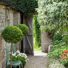Country garden with lollipop hedges and a gravel path: