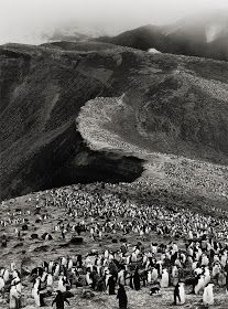 View Chinstrap Penguins (Pygoscelis Antarctica), Deception Island, Antarctica by Sebastião Salgado sold at Photographs on New York Auction 1 April & Learn more about the piece and artist, and its final selling price Magnum Photos, Documentary Photographers, Famous Photographers, Street Photography, Art Photography, Inspiring Photography, Artistic Photography, Deception Island, Edward Weston