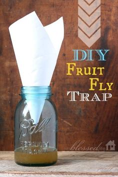 Diy Crafts Ideas : DIY Fruit Fly Trap #pestcontroldiyflytraps #pestcontroldiyfruitflies