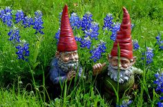 gnomes - Google Search {I can't decide if having a gnome garden is good kitsch or bad kitsch. - ET}