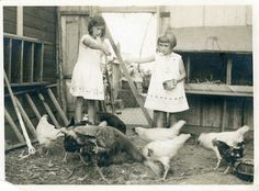Vintage Photo Feeding Chickens Photography Paper by dawnandross, 9.00