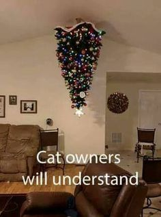 Cat owners will understand  #cats