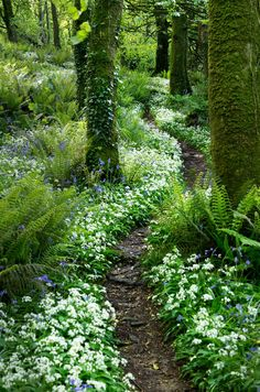 Top Woodland Garden Ideas To Enhance Your Backyard – Garden Design Forest Garden, Woodland Garden, Garden Paths, Forest Path, Woodland Plants, Herb Garden, Fern Forest, Woodland Flowers, Forest Flowers
