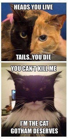 Batman cat; cat memes