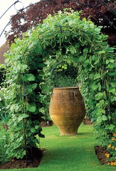 Beans are growing on this arbor. Hanging down for easy pickin'. You can make a vegetable garden look pretty and well-designed.