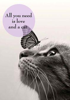 Il 17 febbraio si celebra la Festa nazionale del #gatto. Ecco la nostra raccolta di frasi sui gatti. All you need is #love and a #cat. La vita è più ricca di #amore con un gatto