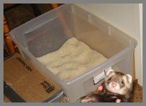 DIY ferret toy - Rice Box - rice in a container ||| enrichment