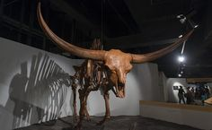 A Giant Bison in Ice Age exhibit  from Cincinnati Museum Center at Union Terminal, JUNE 2012  Photographs Copyright Michael E. Keating